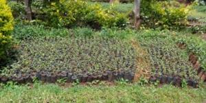 Foto: www.treedom.net